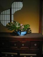20110930-ikebana