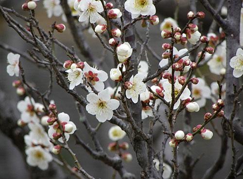 上野屋「春のお得意様謝恩キャンペーン」開催